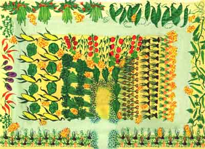 Corn stomping dan4kent for Vegetable garden designs south africa