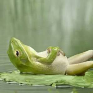 Relaxing Frog 2jcdl3a