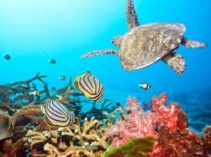tubbataha-reef au_ibtimes_com