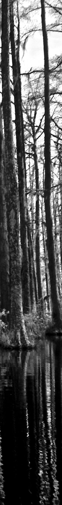 black swamp infrared_3 SRC-crop