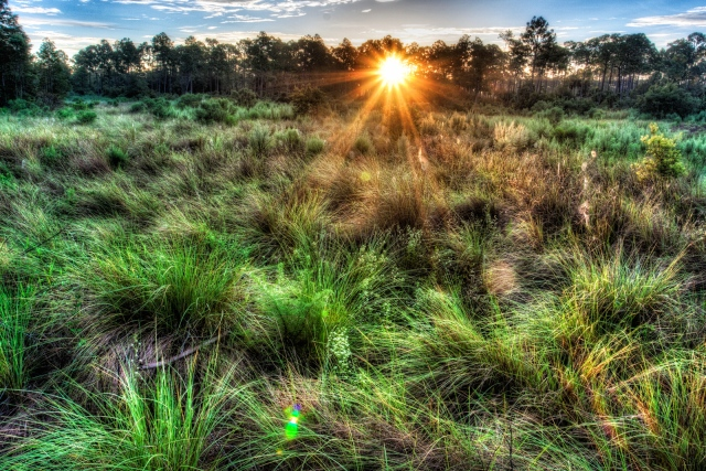 Florida-Prairie-Sunrise