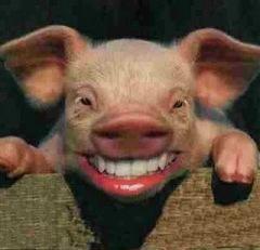 pig-lipstick_0012