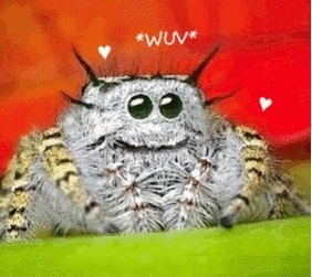 Spider Wuv Close
