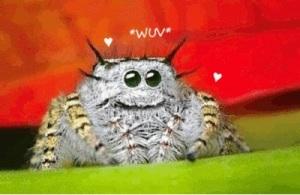 Spider Wuv