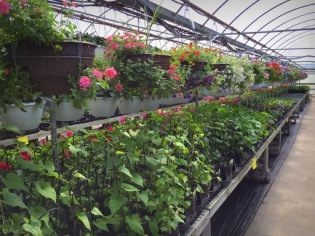 Its Not Work Its Gardening by wiethop-greenhouses